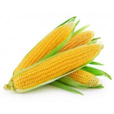 Кукуруза свежая в початках